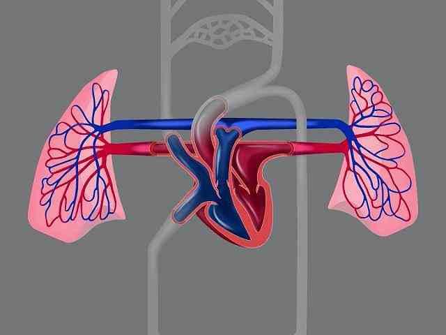 سیستم قلبی عروقی چیست-compressed