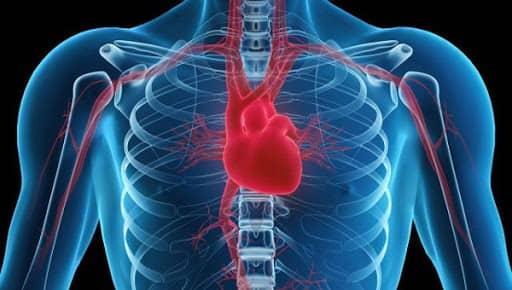 عوامل تعیین کننده برونده قلبی