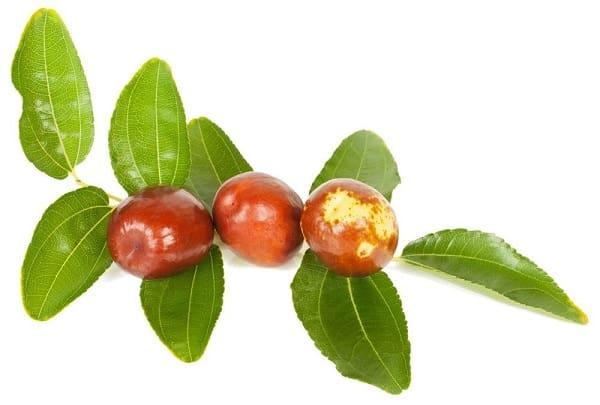 گیاه دارویی کُنار برای تپش قلب